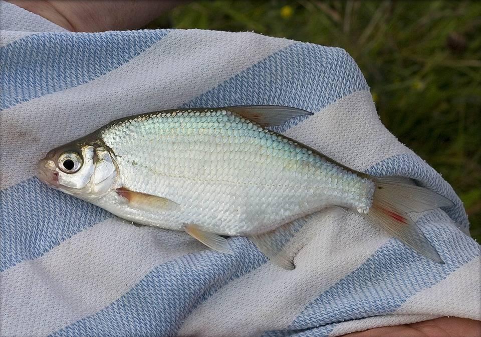 Весенняя рыбалка на подлещика
