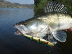 На рыбалку за судаком