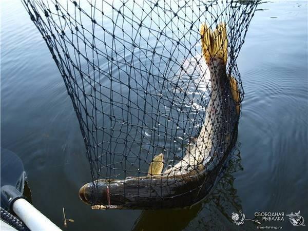 рыболовная снасть сеть на обручах