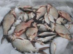 Практические аспекты ловли леща со льда